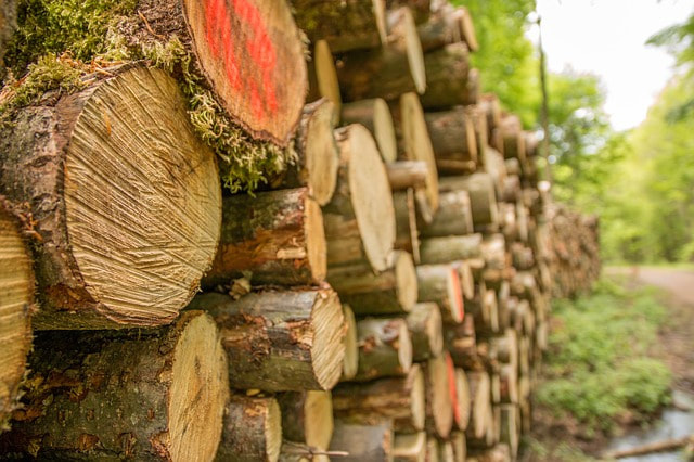 A large stack of logs