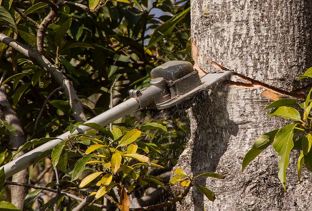 An extendable saw being used for tree trimming