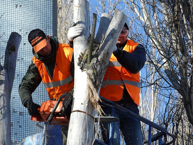 Two tree surgeons in orange neon vests felling a tree close to a building