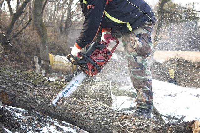 Sawyer chopping up a fallen tree with a large red chainsaw